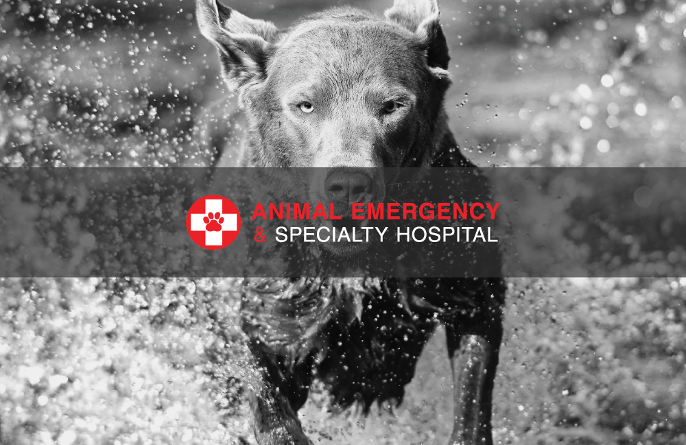 Ottawa Animal Emergency & Specialty Hospital - Always Open